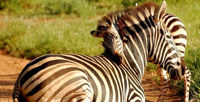 TANSANIA: Privat geführte Safari!..