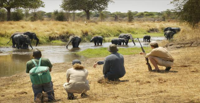 Sonderangebot für 7 tägige Camping Safari durch Tansania ..